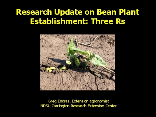 Research Update on Bean Plant Establishment: Three Rs preview