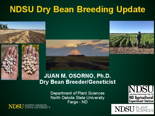 NDSU Dry Bean Breeding Update preview