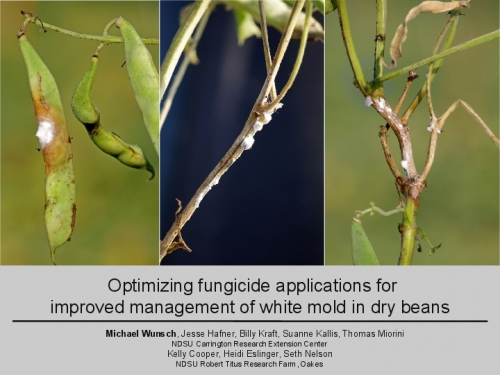 Optimizing Fungicide Applications for Improved Management of White Mold in Dry Beans preview
