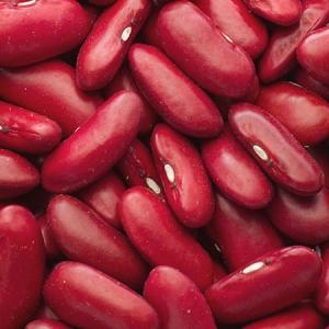northarvest bean day